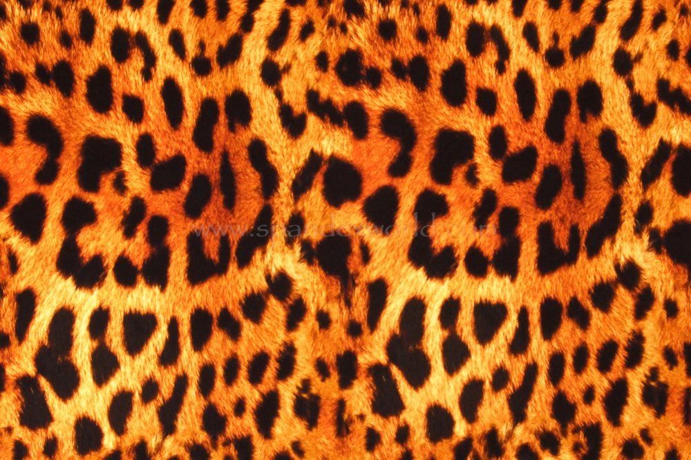 Animal Print (Brown/Gold/Black)